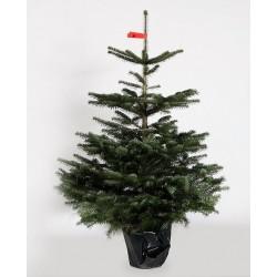Pottetræ leveres kun i postnr 1000-4000-20